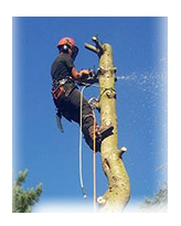 Tree Felling Manchester